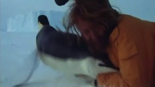 Rugby Tackling an Emperor Penguin - Life in the Freezer - BBC