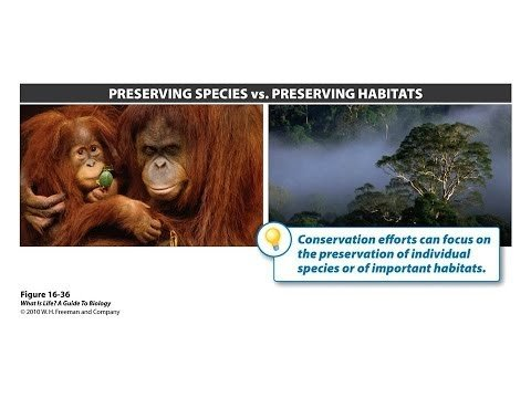 Biology Lecture - conservation, biodiversity, ecology, nature preserves,